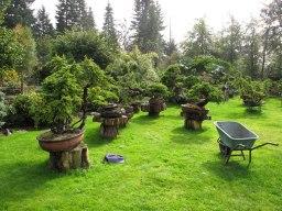 Yamadori collector Anton Nijhuis's garden at a glance.