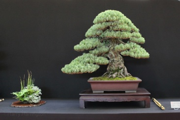 european-bonsai-sans-saulieu-bonsai-show-2016-16