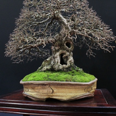 european-bonsai-sans-saulieu-bonsai-show-2016-24