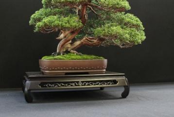 european-bonsai-sans-saulieu-bonsai-show-2016-28
