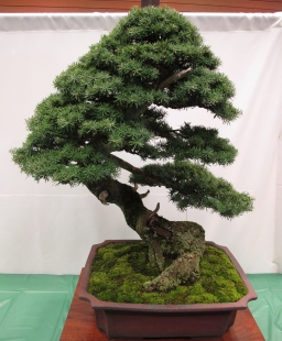 Images From The Metro Vancouver Gardening Society Show